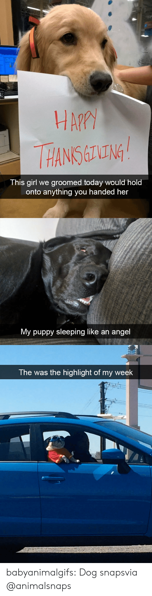 Hans: HA?  HANS ING  This girl we groomed today would hold  onto anything you handed her   My puppy sleeping like an angel   The was the highlight of my week babyanimalgifs:  Dog snapsvia @animalsnaps