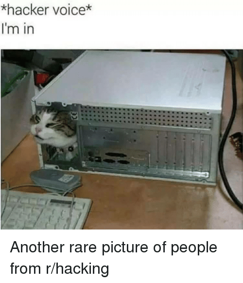 hacking: *hacker voice*  I'm in Another rare picture of people from r/hacking