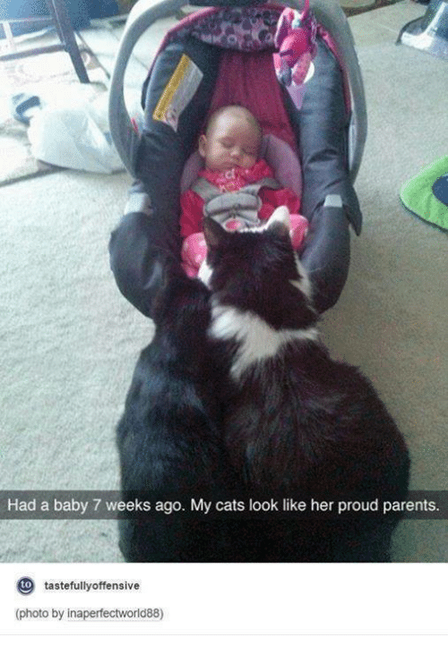 Offensives: Had a baby 7 weeks ago. My cats look like her proud parents.  to  tastefully offensive  (photo by inaperfectworld88)
