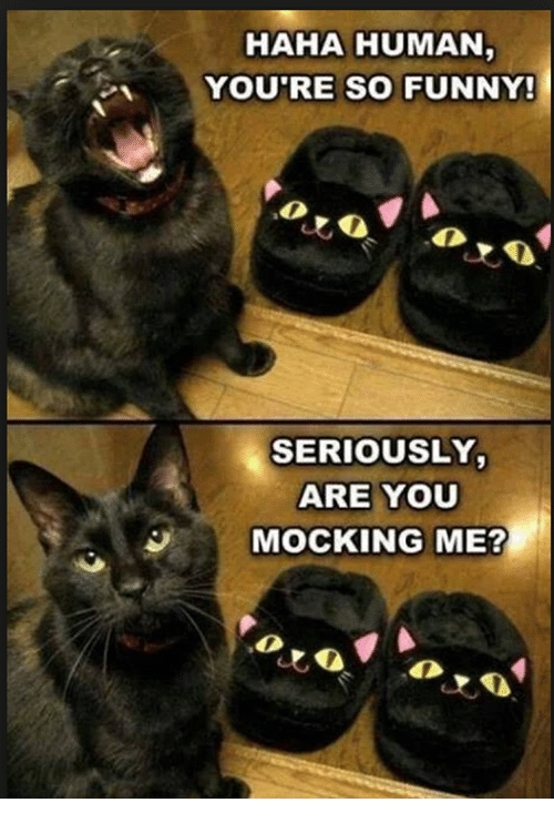 Are You Mocking Me: HAHA HUMAN  YOU'RE SO FUNNY!  SERIOUSLY  ARE YOU  MOCKING ME?