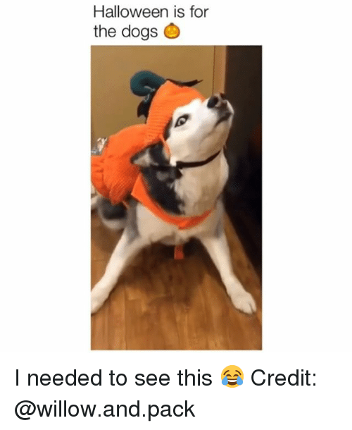 willow: Halloween is for  the dogs I needed to see this 😂 Credit: @willow.and.pack