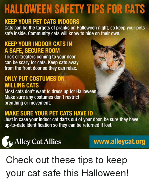 alley cats: HALLOWEEN SAFETY TIPS FOR CATS  KEEP YOUR PET CATS INDOORS  Cats can be the targets of pranks on Halloween night, so keep your pets  safe inside. Community cats will know to hide on their own.  KEEP YOUR INDOOR CATS IN  A SAFE, SECURE ROOM  Trick or treaters coming to your door  can be scary for cats. Keep cats away  from the front door so they can relax.  ONLY PUT COSTUMES ON  WILLING CATS  Most cats don't want to dress up for Halloween.  Make sure any costumes don't restrict  breathing or movement.  MAKE SURE YOUR PET CATS HAVE ID  Just in case your indoor cat darts out of your door, be sure they have  up-to-date identification so they can be returned if lost.  Alley Cat Allies  www.alleycat.org Check out these tips to keep your cat safe this Halloween!
