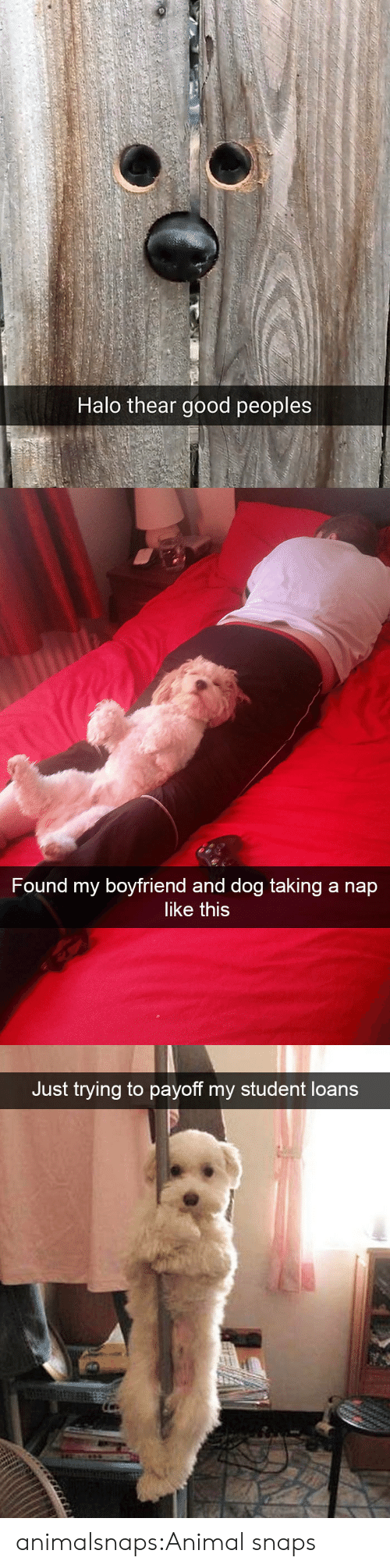 Halo, Target, and Tumblr: Halo thear good peoples   Found my boyfriend and dog taking a nap  like this   Just trying to payoff my student loans animalsnaps:Animal snaps