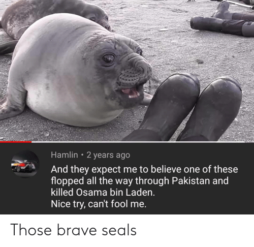 Osama Bin Laden, Brave, and Pakistan: Hamlin 2 years ago  And they expect me to believe one of these  flopped all the way through Pakistan and  killed Osama bin Laden.  Nice try, can't fool me. Those brave seals