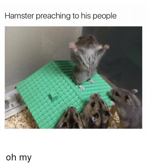 Hamster Preaching to His People Oh My | Preach Meme on