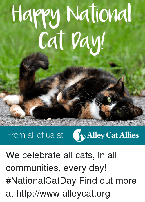 alley cats: Hamy National  Cat Way!  From all of us at  Alley Cat Allies We celebrate all cats, in all communities, every day! #NationalCatDay Find out more at http://www.alleycat.org