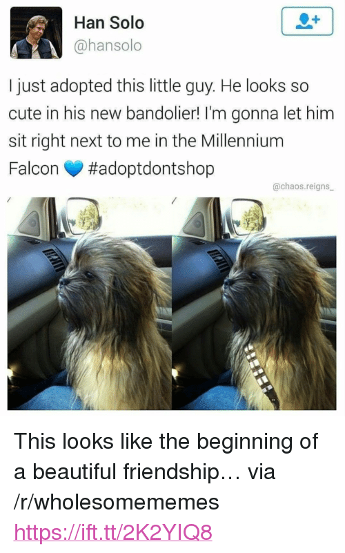 "millennium: Han Solo  @hansolo  I just adopted this little guy. He looks so  cute in his new bandolier! I'm gonna let him  sit right next to me in the Millennium  Falcon #adoptdontshop  @chaos.reigns <p>This looks like the beginning of a beautiful friendship&hellip; via /r/wholesomememes <a href=""https://ift.tt/2K2YIQ8"">https://ift.tt/2K2YIQ8</a></p>"