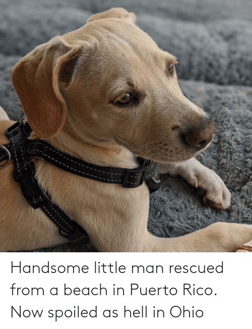 rico: Handsome little man rescued from a beach in Puerto Rico. Now spoiled as hell in Ohio