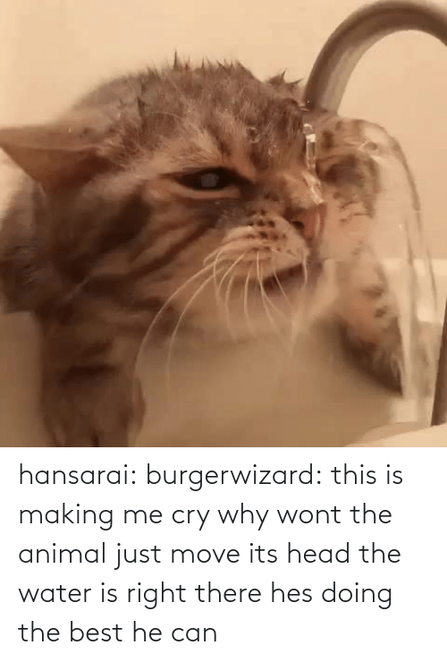 Hes Doing: hansarai:  burgerwizard:  this is making me cry why wont the animal just move its head the water is right there  hes doing the best he can