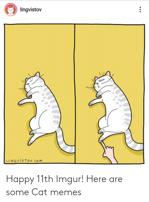 Cat Memes: Happy 11th Imgur! Here are some Cat memes