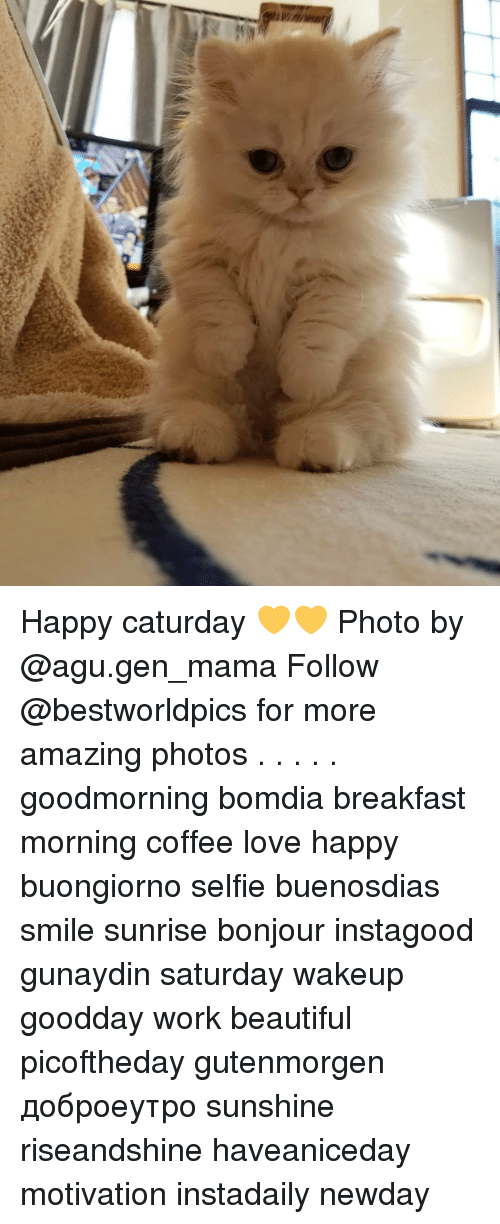 Motivationals: Happy caturday 💛💛 Photo by @agu.gen_mama Follow @bestworldpics for more amazing photos . . . . . goodmorning bomdia breakfast morning coffee love happy buongiorno selfie buenosdias smile sunrise bonjour instagood gunaydin saturday wakeup goodday work beautiful picoftheday gutenmorgen доброеутро sunshine riseandshine haveaniceday motivation instadaily newday