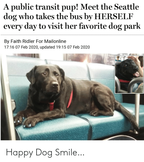 Smile: Happy Dog Smile…