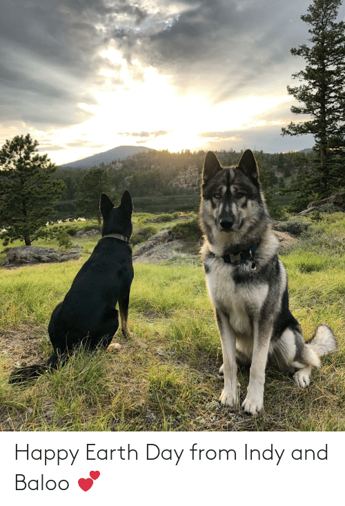Earth Day: Happy Earth Day from Indy and Baloo 💕
