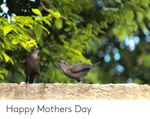 Happy Mothers Day: Happy Mothers Day