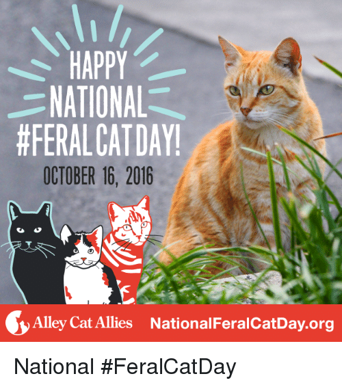 alley cats: HAPPY  NATIONAL  #FERALCAT DAY!  OCTOBER 16, 2016  Alley Cat Allies National FeralcatDay.org National #FeralCatDay