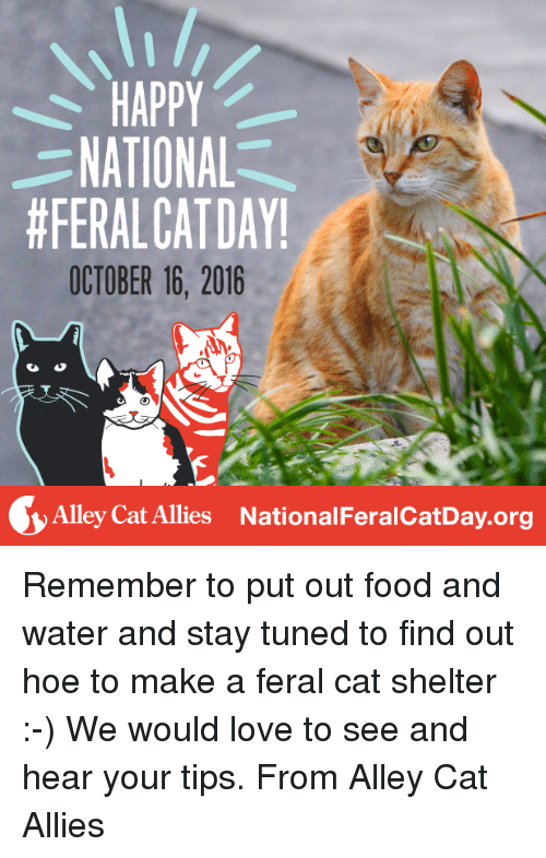 alley cats: HAPPY  NATIONAL  #FERALCAT DAY!  OCTOBER 16, 2016  Alley Cat Allies National FeralcatDay.org Remember to put out food and water and stay tuned to find out hoe to make a feral cat shelter :-) We would love to see and hear your tips. From Alley Cat Allies