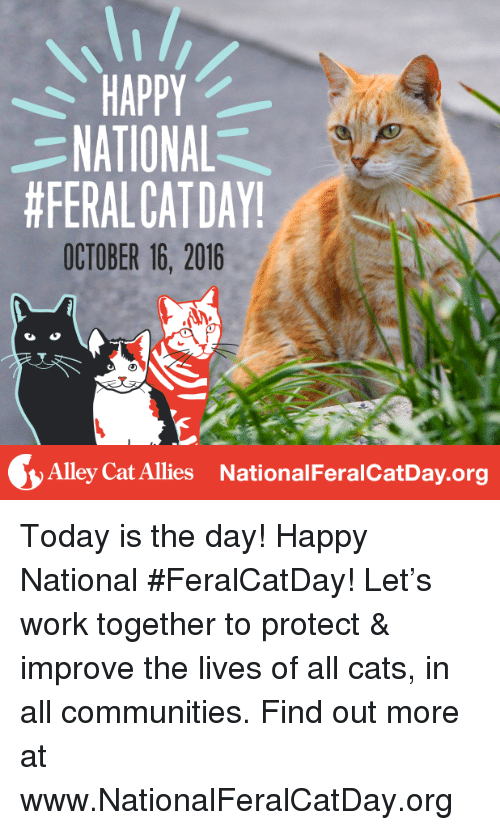 alley cats: HAPPY  NATIONAL  #FERALCAT DAY!  OCTOBER 16, 2016  Alley Cat Allies National FeralcatDay.org Today is the day! Happy National #FeralCatDay! Let's work together to protect & improve the lives of all cats, in all communities. Find out more at www.NationalFeralCatDay.org