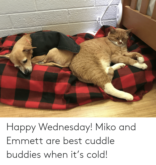 Wednesday: Happy Wednesday! Miko and Emmett are best cuddle buddies when it's cold!