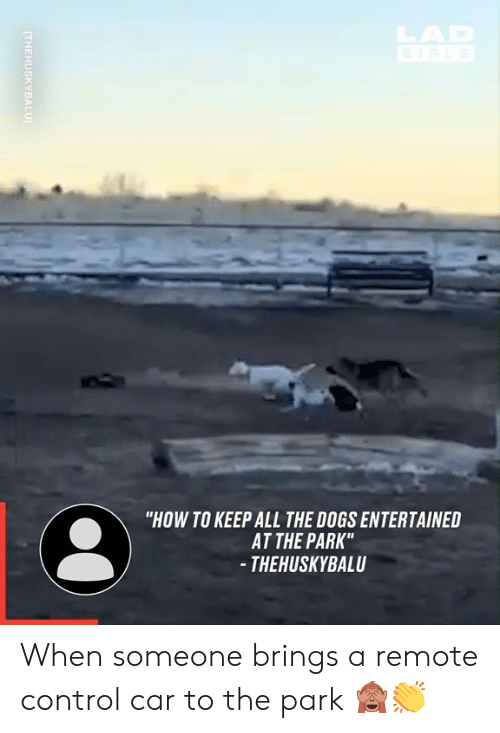 """Dank, Dogs, and Control: HAR  """"HOW TO KEEP ALL THE DOGS ENTERTAINED  AT THE PARK""""  - THEHUSKYBALU  (THEHUSKYBALU When someone brings a remote control car to the park 🙈👏"""