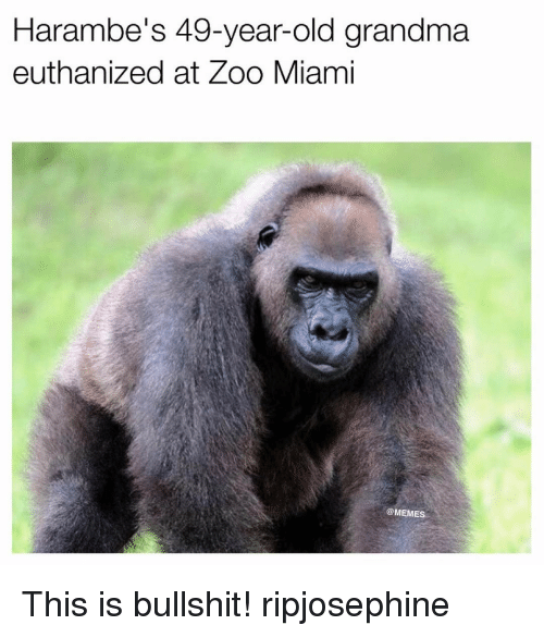 Haramber: Harambe's 49-year-old grandma  euthanized at Zoo Miami  COMEME This is bullshit! ripjosephine