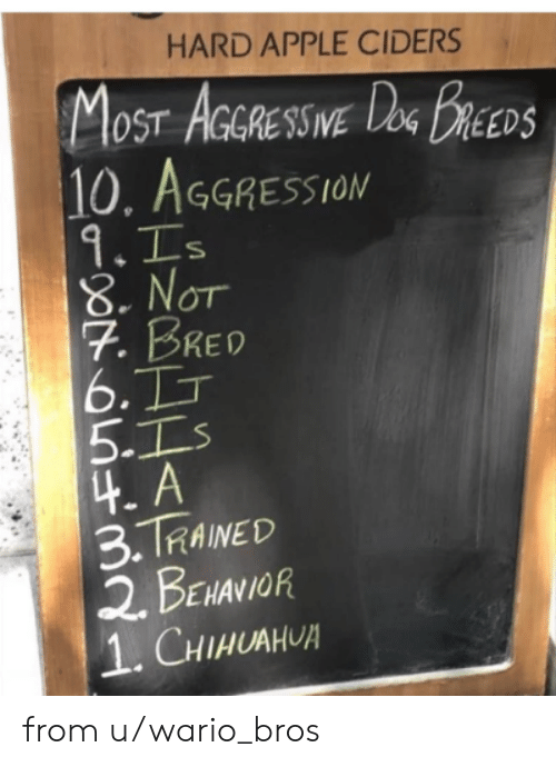 Aggression: HARD APPLE CIDERS  MOST AGRESSWE DeG BREEDS  10. AGGRESSION  9.Is  8.NOT  7. BRED  6.TT  5.Is  4.A  3.TRAINED  2 BENANIOR  1. CHIHUAHUA  IVE from u/wario_bros