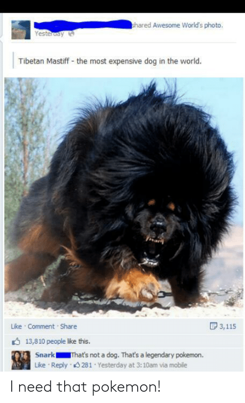 comment share: hared Awesome World's photo,  Yesteruay  Tibetan Mastiff - the most expensive dog in the world.  D 3,115  Like Comment Share  6 13,810 people like this.  Snark  That's not a dog. That's a legendary pokemon.  Reply 3 281 Yesterday at 3:10am via mobile  Like I need that pokemon!
