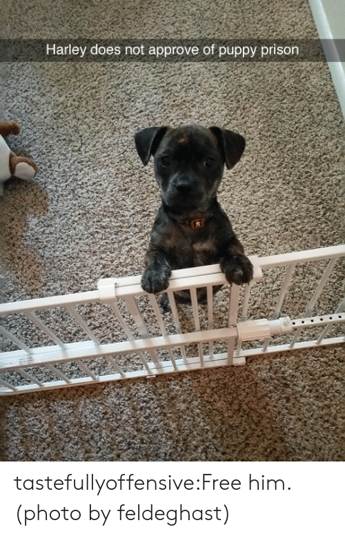 Approve Of: Harley does not approve of puppy prison tastefullyoffensive:Free him. (photo by feldeghast)