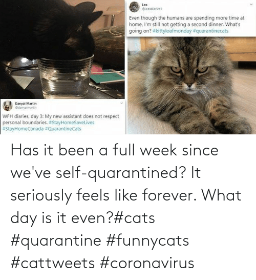 self: Has it been a full week since we've self-quarantined? It seriously feels like forever. What day is it even?#cats #quarantine #funnycats #cattweets #coronavirus