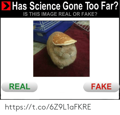 Fake, Image, and Science: Has Science Gone Too Far?  IS THIS IMAGE REAL OR FAKE?  REAL  FAKE https://t.co/6Z9L1aFKRE