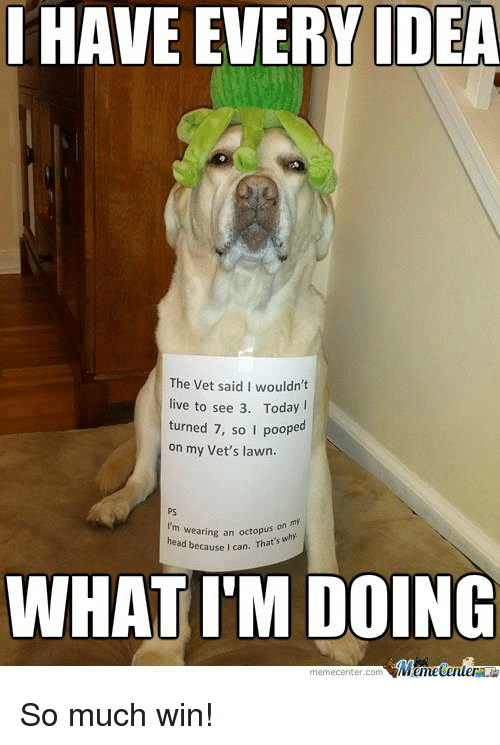 Meme Center Com: HAVE EVERY IDEA  The vet said I wouldn't  live to see 3. Today  turned 7, so I poope  on my Vet's lawn.  I'm wearing an head because I can. That's  why  WHAT IM DOING  Mane Center  meme Center.com So much win!