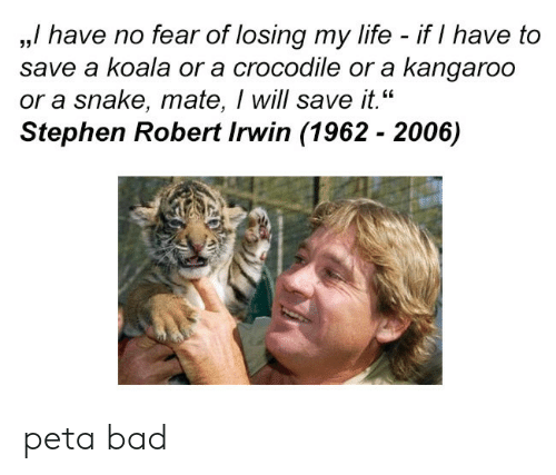 """kangaroo: ,,/ have no fear of losing my life - if I have to  save a koala or a crocodile or a kangaroo  or a snake, mate, I will save it.""""  Stephen Robert Irwin (1962 - 2006)  35 peta bad"""