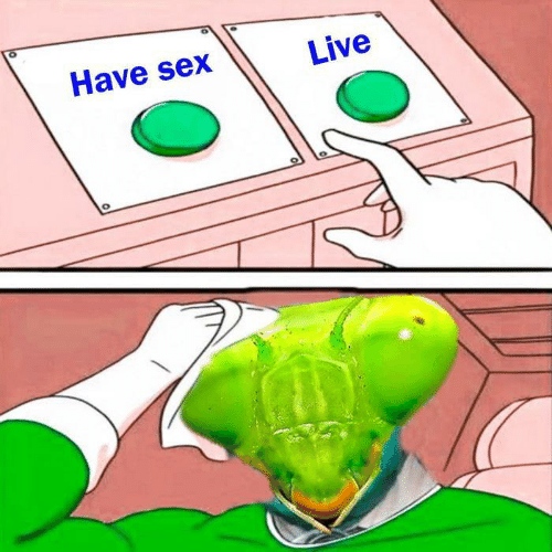 Memes, Sex, and Live: Have sex  Live