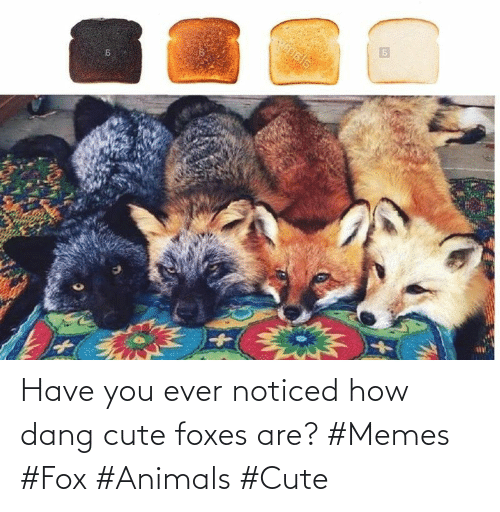 foxes: Have you ever noticed how dang cute foxes are? #Memes #Fox #Animals #Cute