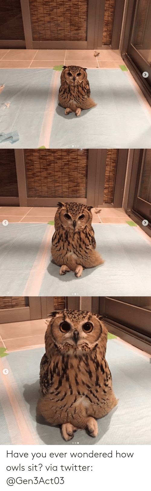 Sit: Have you ever wondered how owls sit?via twitter: @Gen3Act03