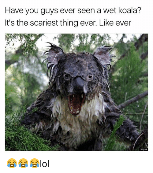 Koalaing: Have you guys ever seen a wet koala?  It's the scariest thing ever. Like ever  ingu 😂😂😂lol