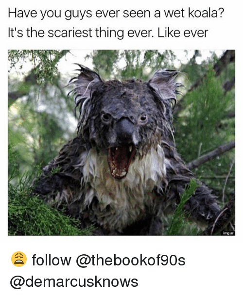 Koalaing: Have you guys ever seen a wet koala?  It's the scariest thing ever. Like ever  imuur 😩 follow @thebookof90s @demarcusknows