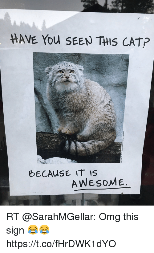 Have You Seen This Cat: HAVE You SEEN THIS CAT?  bECAuSE IT IS  AWESOME RT @SarahMGellar: Omg this sign 😂😂 https://t.co/fHrDWK1dYO