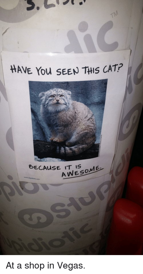 Have You Seen This Cat: HAVE You SEEN THIS CAT?  BECAUSE IT IS ME  AWESo  www. stupidiotic.com At a shop in Vegas.