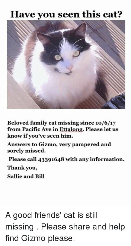 Have You Seen This Cat: Have you seen this cat?  Beloved family cat missing since 10/6/17  from Pacific Ave in Ettalong. Please let us  know if you've seen him.  Answers to Gizmo, very pampered and  sorely missed  Please call 43391648 with any information.  Thank you,  Sallie and Bill A good friends' cat is still missing . Please share and help find Gizmo please.