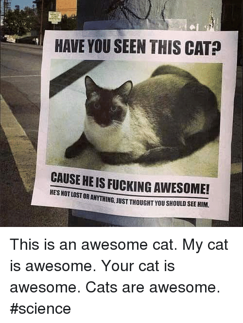Have You Seen This Cat: HAVE YOU SEEN THIS CAT  CAUSE HE IS FUCKING AWESOME!  HES NOT STORANYTHING.1USTTHOUGHTYOUsHOULDSEEHIM. This is an awesome cat.   My cat is awesome.   Your cat is awesome.   Cats are awesome. #science