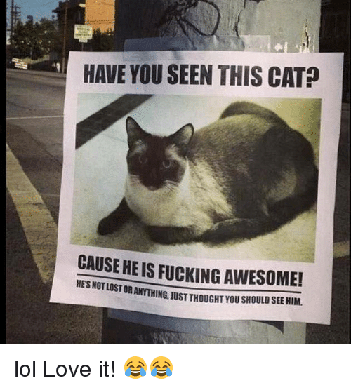 Have You Seen This Cat: HAVE YOU SEEN THIS CAT?  CAUSE HE IS FUCKING AWESOME!  RANYTHING, JUST THOUGHT YOU SHOULD SEE HIM.  HES NOT LOST O lol Love it! 😂😂