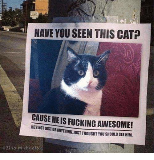 Have You Seen This Cat: HAVE YOU SEEN THIS CAT?  CAUSE HE IS FUCKING AWESOME!  OR ANYTHING, UST THOUGHT YOU SHOULD SEE HIM.  HES NOTLOST  GZina Michaelosv