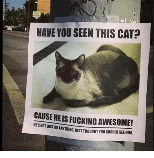 Have You Seen This Cat: HAVE YOU SEEN THIS CAT?  CAUSE HE IS FUCKING AWESOME!  STOR ANYTHING, JUST THOUGHT YOU SHOULD SEE HIM.  HES NOT LO