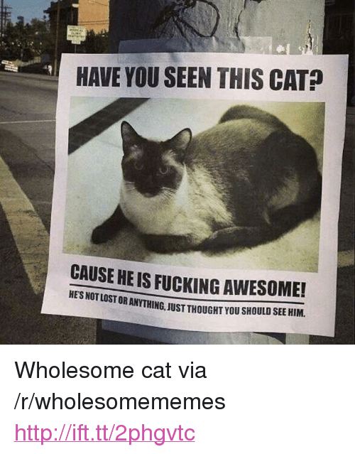 "Have You Seen This Cat: HAVE YOU SEEN THIS CAT?  CAUSE HE IS FUCKING AWESOME!  HE'S NOT LOST OR ANYTHING, JUST THOUGHT YOU SHOULD SEE HIM. <p>Wholesome cat via /r/wholesomememes <a href=""http://ift.tt/2phgvtc"">http://ift.tt/2phgvtc</a></p>"