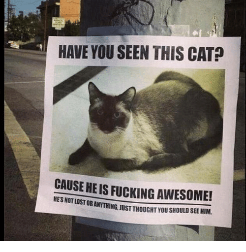 Have You Seen This Cat: HAVE YOU SEEN THIS CAT?  CAUSE HE IS FUCKING AWESOME!  LOST OR ANYTHING, JUST THOUGHT YOU SHOULD SEE HIM.
