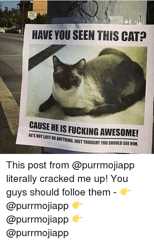 Have You Seen This Cat: HAVE YOU SEEN THIS CAT?  CAUSE HE IS FUCKING AWESOME!  HES NOTLOST  OR ANYTHING, JUST THOUGHT YOU SHOULD SEE HIM This post from @purrmojiapp literally cracked me up! You guys should folloe them - 👉 @purrmojiapp 👉 @purrmojiapp 👉 @purrmojiapp