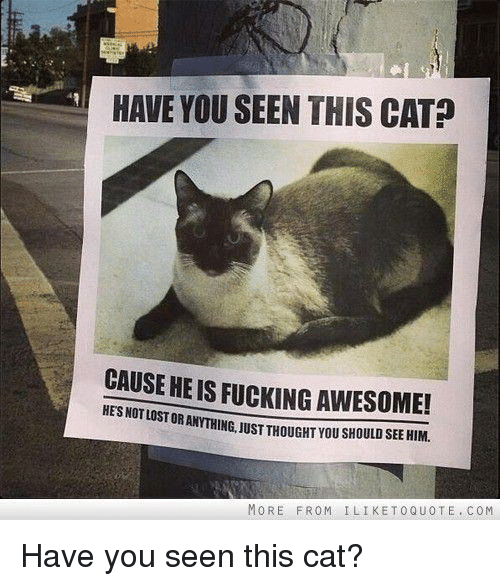 Have You Seen This Cat: HAVE YOU SEEN THIS CAT?  CAUSE HE IS FUCKING AWESOME!  HES NOT LOST  OR ANYTHING, JUSTTHOUGHT YOU SHOULD SEE HIM.  MORE FROM İLIKETOQUOTE . COM