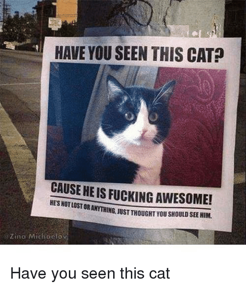 Have You Seen This Cat: HAVE YOU SEEN THIS CAT?  CAUSE HE IS FUCKING AWESOME!  HES NOT LOST OR ANYTH  ING, JUST THOUGHT YOU SHOULD SEE HIM.  o Zina Michaelo