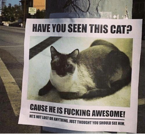 Have You Seen This Cat: HAVE YOU SEEN THIS CAT?  CAUSE HE IS FUCKING AWESOME!  OR ANYTHING, JUST THOUGHT YOU SHOULD SEE HIM.  HE'S NOT LOST