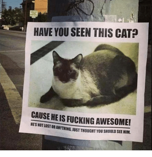 Have You Seen This Cat: HAVE YOU SEEN THIS CAT?  CAUSE HE IS FUCKING AWESOME!  HES NOT LOST OR  ANYTHING, JUST THOUGHT YOU SHOULD SEE HIM.